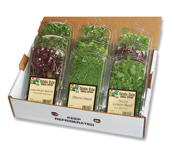 Chefs Toy Box 6 Pack